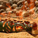 ceramica raku...la cottura ela riduzione (2)
